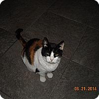 Adopt A Pet :: Battina - Riverside, RI