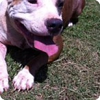 Adopt A Pet :: Riley - Blanchard, OK