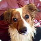 Adopt A Pet :: Indie (in Oregon)
