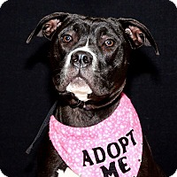 Adopt A Pet :: Diamond AKA Luna - Garden City, MI