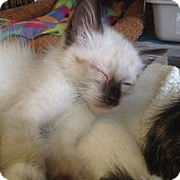 Adopt A Pet :: Olaf - Island Park, NY