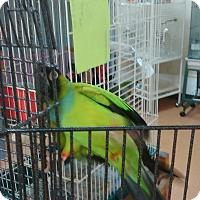 Adopt A Pet :: Zumbi - Villa Park, IL