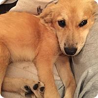 Adopt A Pet :: Gracie - Natchitoches, LA