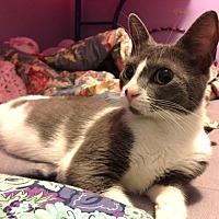 Adopt A Pet :: Lily - Tampa, FL