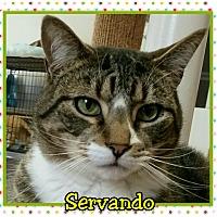 Adopt A Pet :: Servando - Atco, NJ