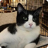 Adopt A Pet :: Daniel - Massapequa, NY