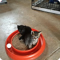 Adopt A Pet :: JOLLY RANCHER - New Woodstock, NY