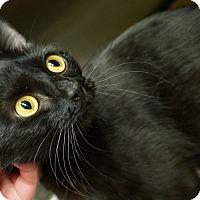 Adopt A Pet :: Foxy - Monroe, GA