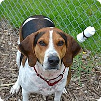 Adopt A Pet :: Beauford - Delaware, OH