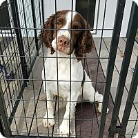 Adopt A Pet :: Bailey - Sawyer, ND