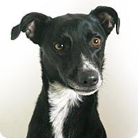 Adopt A Pet :: Mur - Redding, CA