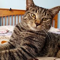 Adopt A Pet :: Fiona:massage specialist - Tucson, AZ