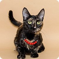 Domestic Shorthair Cat for adoption in Wyandotte, Michigan - Betsy
