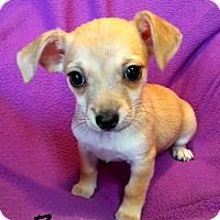 Adopt A Pet :: Jelly Bean - Los Angeles, CA