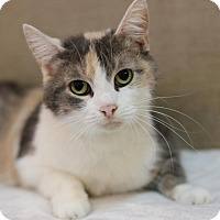 Domestic Shorthair Cat for adoption in Midland, Michigan - Nalette