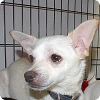 Adopt A Pet :: Twinkles - Longview, WA
