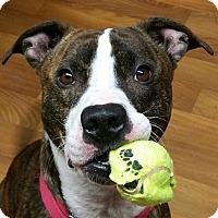Adopt A Pet :: Petey - Lisbon, OH