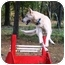 Photo 3 - German Shepherd Dog/Labrador Retriever Mix Dog for adoption in Conyers, Georgia - Lennon