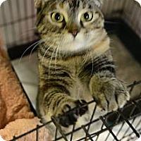 Adopt A Pet :: Becky - Muskegon, MI