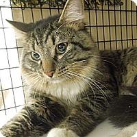 Adopt A Pet :: Ozzie - Medina, OH