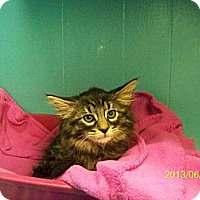 Adopt A Pet :: Yackey - Dover, OH