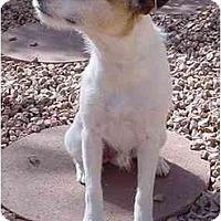 Adopt A Pet :: Molson - Scottsdale, AZ