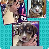 Adopt A Pet :: Parker - Silsbee, TX
