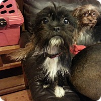 Adopt A Pet :: Zoey - Seneca, SC