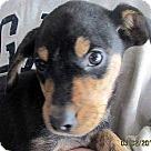 Adopt A Pet :: Ale