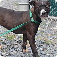 Adopt A Pet :: Baby - Millersville, MD