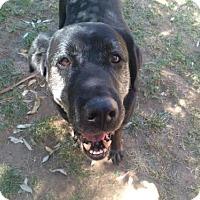 Adopt A Pet :: Simon - Carmichael, CA