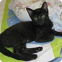 Adopt A Pet :: Kenna - North Highlands, CA