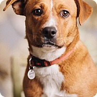 Adopt A Pet :: Maizy - Portland, OR