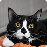 Adopt A Pet :: Mollie - Sarasota, FL