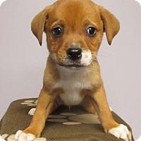 Adopt A Pet :: Wrigley - 6 weeks old - Charleston, SC
