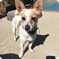 Adopt A Pet :: Daisy - Humble, TX
