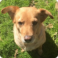 Adopt A Pet :: Mari - Cheshire, CT