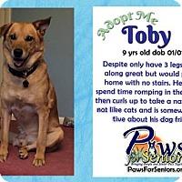 Adopt A Pet :: Toby - Bealeton, VA