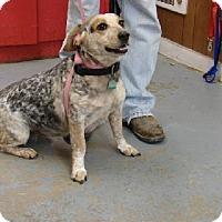 Adopt A Pet :: Pepper - Aurora, IL