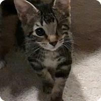 Adopt A Pet :: Jack - Ortonville, MI