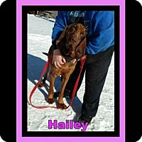 Adopt A Pet :: Hailey Needs a Foster or New Family - North Creek, NY