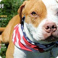 Adopt A Pet :: Brody - Villa Park, IL