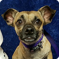 Adopt A Pet :: Chuck - Yucaipa, CA