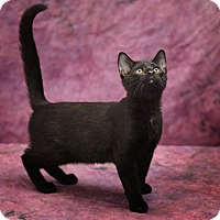 Adopt A Pet :: Jaden - Harrisonburg, VA