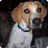 Adopt A Pet :: Pistachio - Oak Lawn, IL
