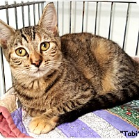 Adopt A Pet :: Tabitha - Key Largo, FL