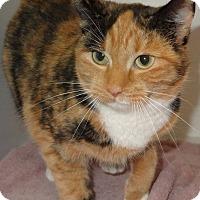 Adopt A Pet :: JoJo - Lapeer, MI