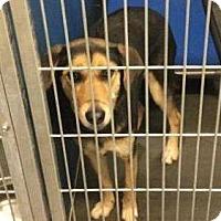 Adopt A Pet :: Ann - Henderson, NC