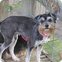 Adopt A Pet :: Dolynda - Fort Atkinson, WI