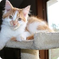 Adopt A Pet :: Monroe - Rochester, MN